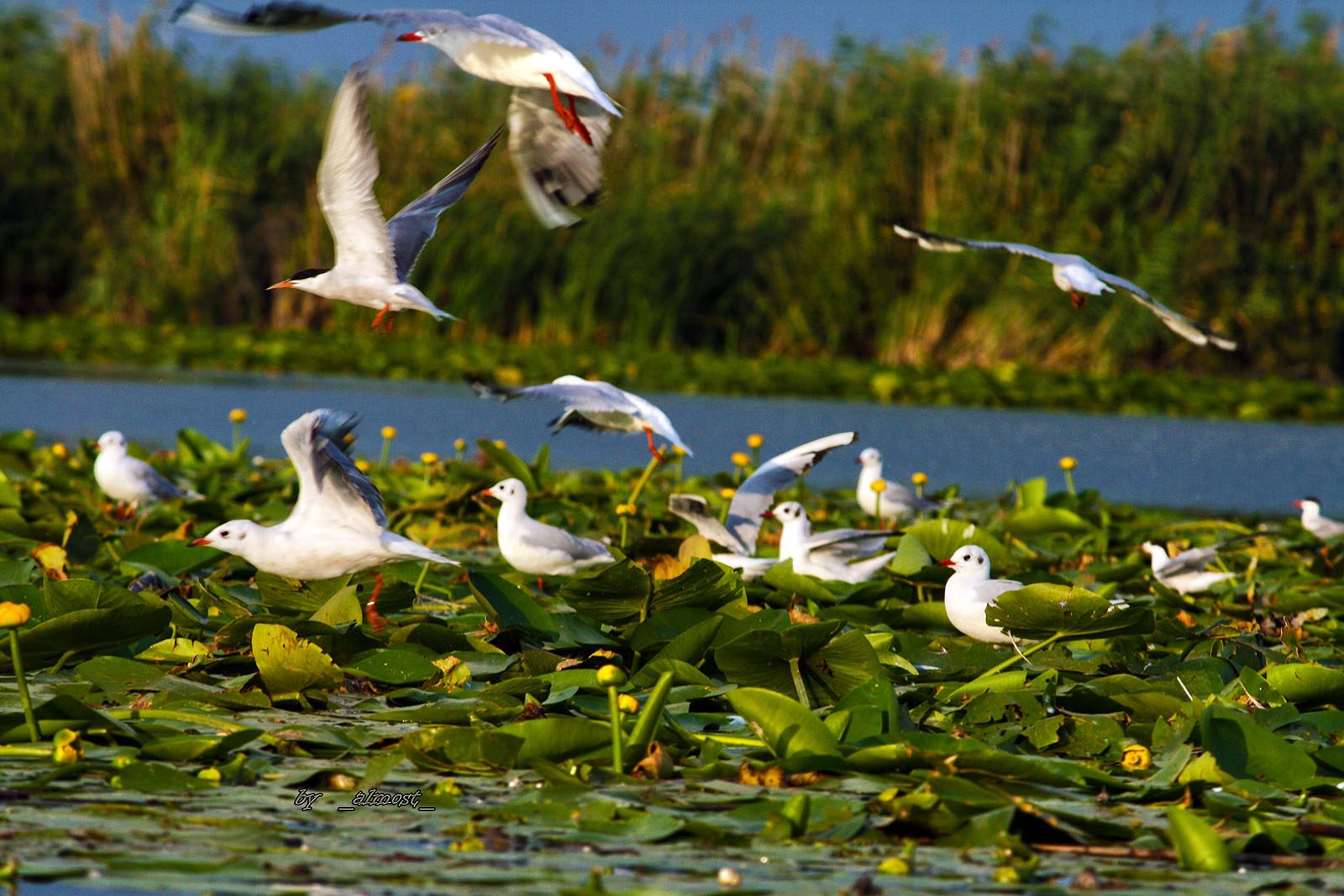 Danube Delta,UNESCO,Biosphere Reservation,traditional food,people,landscape,food Danube delta,carp traditional,sturgeons
